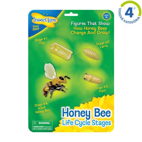 Životný cyklus včely
