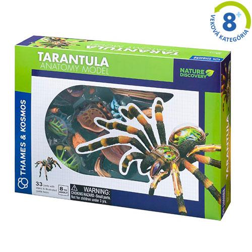 Tarantula - model